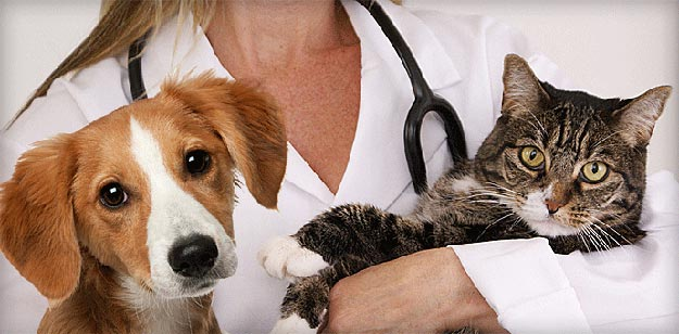 Website design for your veterinary website